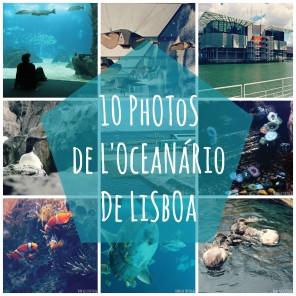 selection-photo-oceanario-lisbonne-portugal